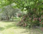 Borgo Colderba garden